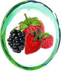 Forest Fruit Innovation