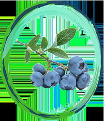 Innovation Blueberry